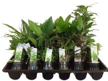 10 Mixed Potted Plants