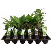 50 Mixed Potted Plants