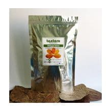 Catappa Leaves Bulk Pack - Medium (13-18cm) x 50