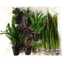 "Plant Collection for 30"" Jungle Style Tank"