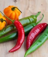 Chili Mixed Colors 20 Seeds,Mixed colours&sizes,many varieties in1Packet!ORGANIC