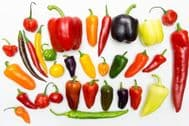 Chili Seeds Collection  - 10 Unusual Varieties & Over 100 Seeds!