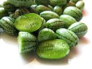 Cucamelon Seeds, Mouse Melon Seeds- Unusual, Tasty Snack:)