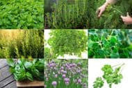 Herb Collection - 10 packets, 10 different varieties, Grow your own herb garden