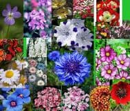 Mixed Annual Flowers Seeds 1000 + Best Mix, Rainbow of Colours in your Garden