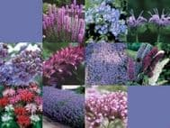 Wild Flower Seeds Butterfly and Bees Mix 10 g -32 Varieties- Only Flowers - BULK
